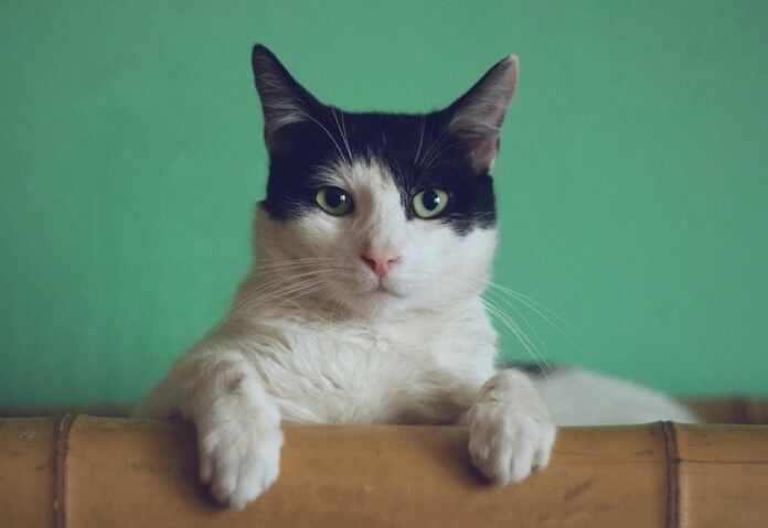 Tips Treat Cat Dandruff