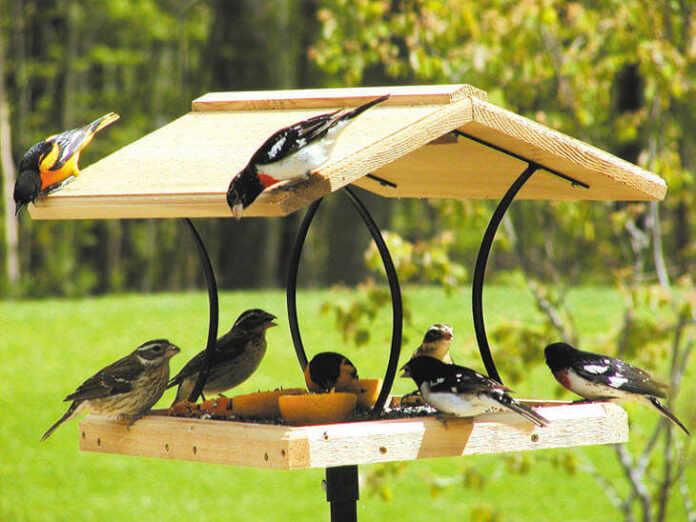 Backyard Wildlife Garden Birds